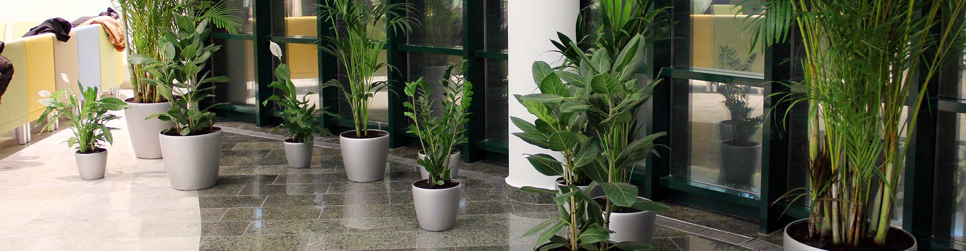 озеленение интерьеров здания Сбербанка РФ (проектирование и реализация)